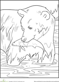 Grizzly Bear Coloring Page animals