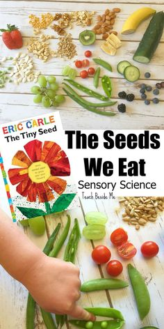 Sensory nature science for kids- The Seeds We Eat. Great for Eric Carle's Tiny Seed book.  via @karyntripp Seed Activities For Preschool, Seeds Preschool, Seed Crafts For Kids, Seed Art For Kids, Science For Preschoolers, Flower Activities For Kids, Nature For Kids, Science For Kindergarten, Preschool Food