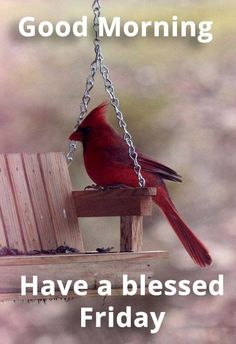 """A Cardinal: """"So kind of the 'Human' house-owners, to make this porch swing especially for me! Now I can listen to all the other birds in the mornings. Pretty Birds, Love Birds, Beautiful Birds, Rest In The Lord, Cardinal Birds, Kinds Of Birds, Theme Noel, Little Birds, Bird Watching"""