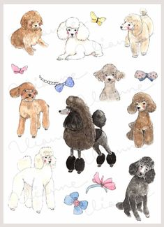 CLIP ART Watercolor Poodles & Hair Bows Set. 15 by Vianneart