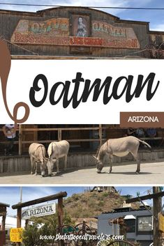 Tucked away in the Black Mountains of Mohave County, Oatman, Arizona is an old gold mining spot located along the famous Route 66. Once a deserted ghost town, today Oatman solely survives off tourist shops/attractions that lure visitors who come to see the well preserved period-specific architecture & wild burros that roam the streets! www.thetattooedtravelers.com // Things To Do In Arizona // Arizona Ghost Town // Route 66 Road Trip // #oatman #oatmanarizona #arizona Arizona Travel, Arizona Usa, Arizona Trip, Packing List For Vacation, Vacation Trips, Arizona Ghost Towns, Route 66 Road Trip, Historic Route 66, Southwest Usa