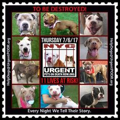 TO BE DESTROYED 07/06/17 - - Info    To rescue a Death Row Dog, Please read this:http://information.urgentpodr.org/adoption-info-and-list-of-rescues/   To view the full album, please click here: http://nycdogs.urgentpodr.org/tbd-dogs-page/ -  Click for info & Current Status: http://nycdogs.urgentpodr.org/to-be-destroyed-4915/
