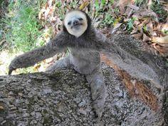 Come on, you know you want a sloth hug!