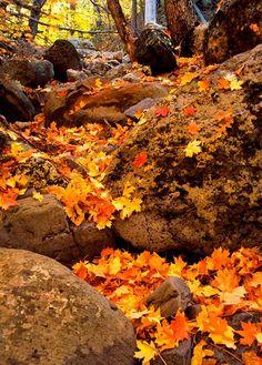 GORGEOUS Fall Autumn Colours #fallcolors #leaves