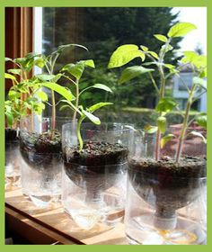 Eco-Tuesdays Reforest your ideas: PET self-watering planters and cutting protectors