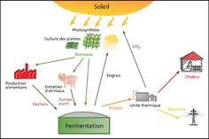 Cycle biomasse