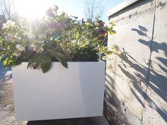 Høybed fra BEDD i galvanisert pulverlakk hvit Plants, Outdoor, Design, Patio, Outdoors, Plant, Outdoor Games, Outdoor Life
