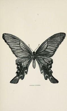 tuschezeichnung libelle insekt tierillustration tuschezeichnungen pinterest insekten. Black Bedroom Furniture Sets. Home Design Ideas