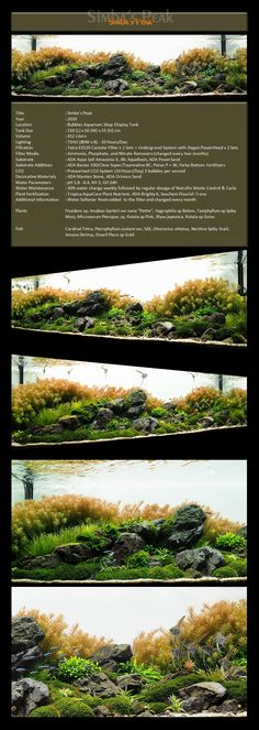 Bubbles Aquarium - Aquascapes (2009 Aquascaping Gallery) LAYOUT DETAILED !  #Aquascape #Aquascaping