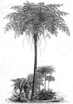 Identification Guide for Carboniferous Fern Fossls Jurassic Park Tattoo, Fern Tattoo, Fossil Hunting, Tree Fern, Field Museum, Botanical Drawings, Pastel Drawing, Small Plants, Prehistoric