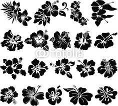 Hibiscus Flower Silhouettes