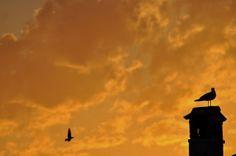 Dai tetti di Rovigno