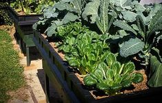 Our large raised garden beds are perfect for growing big vegetables. Use these large garden beds as an outdoor veggie patch or even as a community garden. Landscape Trees, Community Gardening, Large Raised Garden Beds, Garden, Growing, Growing Herbs, Growing Gardens, Country Landscaping, Outdoor Gardens