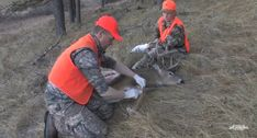 The gutless method of dressing out a deer or elk will allow hunters to get deep into the wilderness and pack out their game meat and cape. Whitetail Deer Hunting, Deer Hunting Tips, Big Game Hunting, Trophy Hunting, Coyote Hunting, Hunting Guns, Archery Hunting, Hunting Stuff, Hunting Cabin