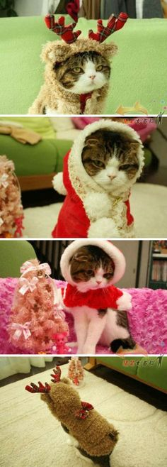 Next Christmas gift for my cat. awwww!!! My Roscoe is going to hate me! lol