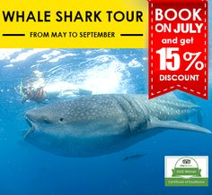 Swim with Whale Shark Cancun Tour, live the adventure of swimming with the Whale Sharks, the biggest fish in the Ocean, at the best…
