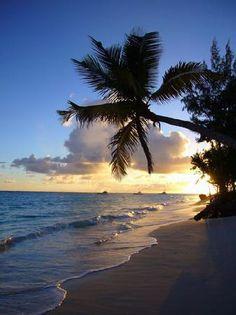 A Great Time!!!!! - Grand Palladium Palace Resort, Spa & Casino, Punta Cana Traveller Reviews - TripAdvisor