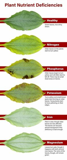 Plant nutrient deficiencies