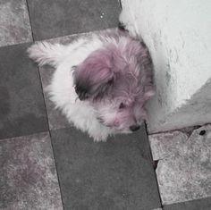 Esta es Pompón, mi perrita de tres meses, acaba de quedarse sola, pues su hermana consiguió hogar. Plano entero, ángulo cenital.