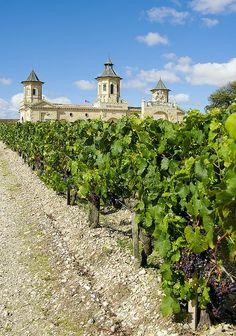 st estephe bordeaux | Vineyards of St Estephe, Aquitaine, France