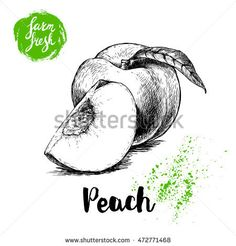 Find Hand Drawn Sketch Style Peach Fruit stock images in HD and millions of other royalty-free stock photos, illustrations and vectors in the Shutterstock collection. Fruit Quotes, Fruit Salad With Marshmallows, Fruit Sketch, Healthy Fruit Desserts, Fruits Drawing, Fruits For Kids, Fruit Picture, Fruit Vector, Peach Fruit
