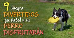 En vez de la larga y aburrida caminata diaria con su perro, ¿por qué no incorpora algunos de estos juegos y actividades divertidas en su rutina? http://mascotas.mercola.com/sitios/mascotas/archivo/2015/02/09/juegos-divertidos-para-perros.aspx