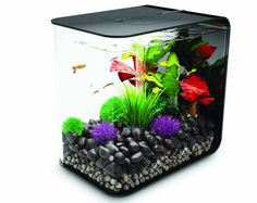 BiOrb 15L Flow Aquarium is beautiful and modern aquarium to set up and own.