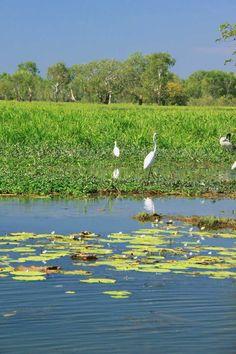 Kakadu, Darwin NT, Australia   - Explore the World with Travel Nerd Nici, one Country at a Time. http://TravelNerdNici.com
