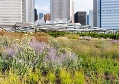#Chicago The Lurie Garden, Millennium Park