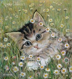PortForLio - The Daisy Chain – green eyed kitten