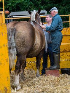 cheval breton : concours au château de Kerjean (17 photos) © Paul Kerrien https://toilapol.net #myfinistere Finistère, Bretagne