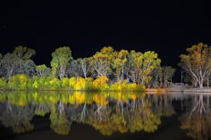 Tuesday May 28 2013 - gswatty  Photo by Grant Schwartzkopf.  Riverland, South Australia.