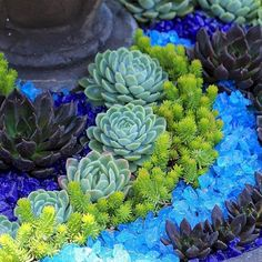Marvelous Awesome Container Garden with Succulents: 45+ Best Design Ideas https://freshouz.com/awesome-container-garden-with-succulents-45-best-design-ideas/ #gardeningwithcontainers