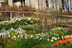 Charlie McCormick Flowers Daffodils, Tulips, English Flowers, English Country Weddings, Flower Farm, Diy Flower, Garden Spaces, Houseplants, Wild Flowers