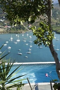 Coconut Breeze - Coral Bay
