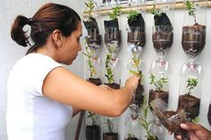 Une bonne idée de mur végétal