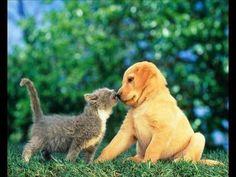 Divertidas imágenes de perros y gatos: ¡mejores amigos!