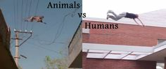 Animals vs Humans - Parkour & Freerunning HD
