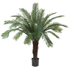 5¡¯ Cycas Tree UV Resistant (In-door/Out-Door) >>> Be sure to check out this awesome product.