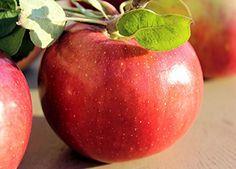 Malus 'Cortland' - Cortland Apple