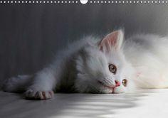 Posterbuch: Kinderstube der Perserkatzen #white #cat #persian