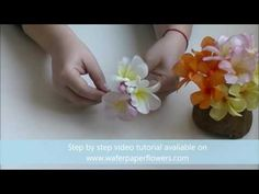 Wafer paper flower Gerbera with Petya Shmarova Trailer - YouTube