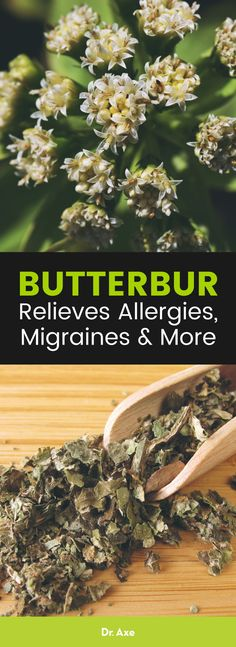 Butterbur can help prevent allergy symptoms without the unpleasant side effects. It is good for more than just allergy s Natural Headache Remedies, Natural Remedies For Anxiety, Natural Health Remedies, Asthma Symptoms, Allergy Symptoms, Holistic Remedies, Herbal Remedies, Prevent Migraines, Allergy Remedies