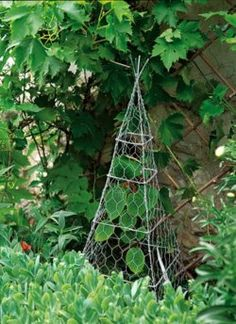 DIY chicken wire topiary...