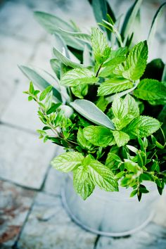 10 Plants that Smell Heavenly: Mint has a refreshing, unique smell from your typical sweet-smelling blossom. It is easy to grow indoors and can be used to make homemade tea. Balcony Plants, Patio Plants, Outdoor Plants, Garden Plants, Indoor Herbs, Herb Garden, Vegetable Garden, Homemade Tea, Shade Flowers