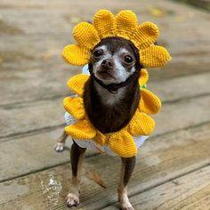 Vestiti per cani rosa Pet Cute Bunny Costume con Pom Pom cane Dachshund Clothes, Chihuahua Clothes, Cute Dog Clothes, Cute Chihuahua, Chihuahua Costumes, Dog Costumes, Poodle, Princess Dog Costume, Crochet Dog Clothes