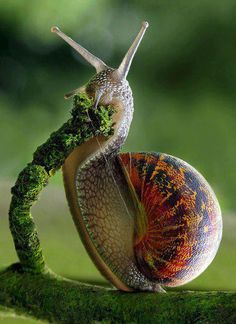 So what's a garden without snails!!!!