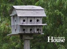 Purple Martin On Pinterest Martin Bird House Birdhouses