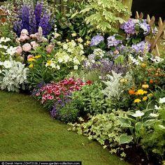 Plan to imitate - larkspur, peony, coreopsis, silver, dianthus, hosta,