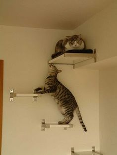 Ikea Hacks again-- the shelves can be cut to desired lengths to create your wall cat ladder.